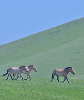 Back to UB via Khustai National Park